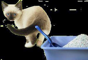 Наповнювач для котячого туалету