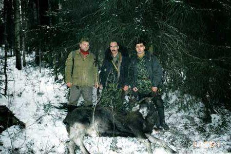 Натаска лайки у лося