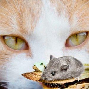 Натуральне харчування для кішок