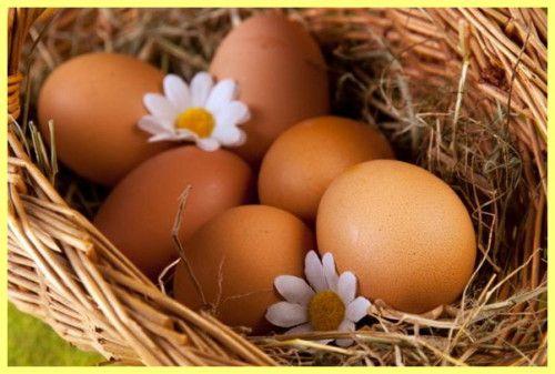 Як правильно вибрати курячі яйця