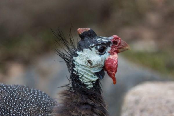 Голова птаха крупним планом