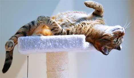 Деякі поведінкові проблеми у кішок.
