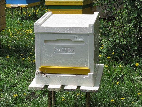 Незвичайна конструкція, поліпшені показники - новаторські вулики в світі бджільництва