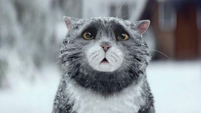 Кішка Міг і її Різдво.
