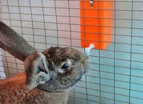 Ніпельна поїлка для кроликів - вирішення проблеми напування тварин