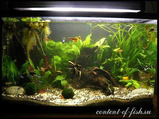 Нітрити та нітрати в акваріумі