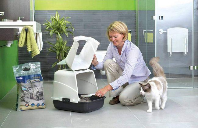 Як облаштувати туалет для котячої сім`ї?