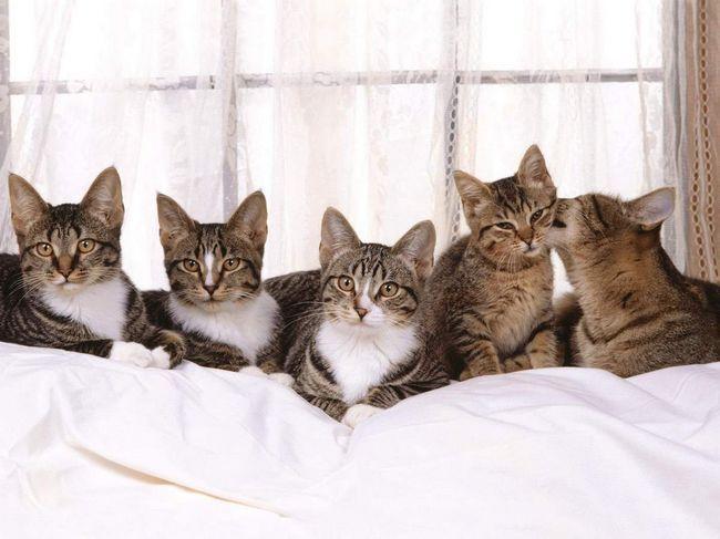 Як бути, коли кішок багато?