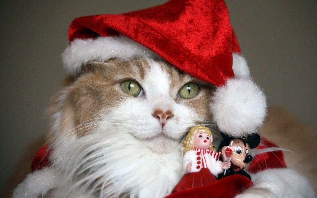 Новорічні шпалери з кішками
