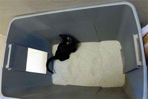 Привчання кошенят до туалету