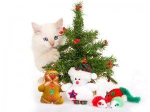 Новий рік з кішкою