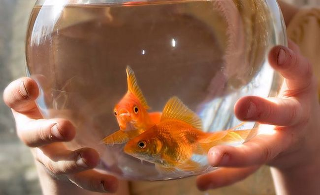 Чи потрібно наступати на чужі граблі початківцю акваріумісти?