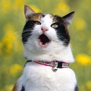 Про що говорять кішки