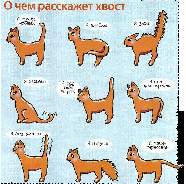 Про що розповість котячий хвіст
