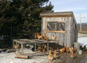 Забезпечуємо десяток курочок житлом - будуємо курник