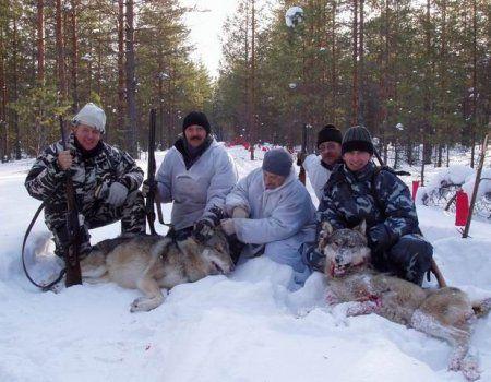 Облавне полювання на вовків з прапорцями