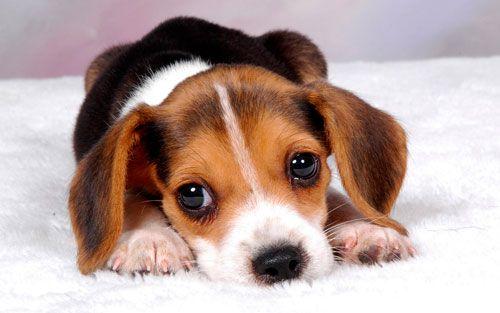 Виявлення та профілактика рахіту у собаки