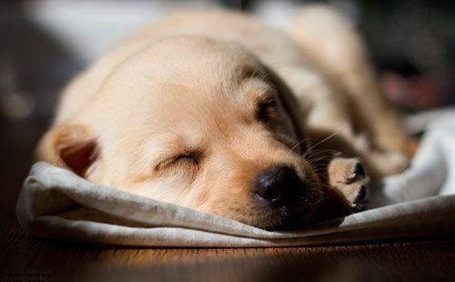 симптоми рахіту у собак