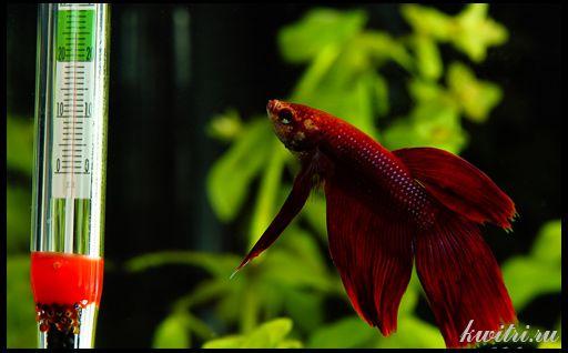 Устаткування для акваріума