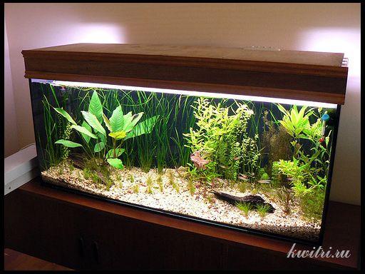 правильне освітлення акваріума