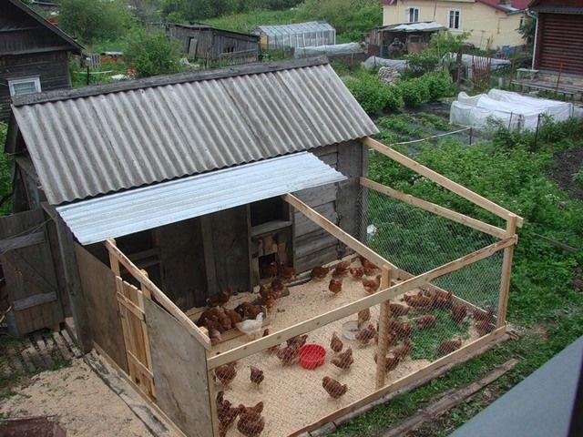 Кури ходять по загону