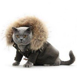 Котяча одяг