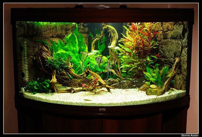 Оформлення акваріума