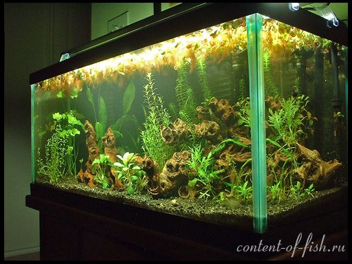 дизайн акваріума фото
