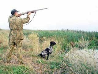 Полювання на диких звірів