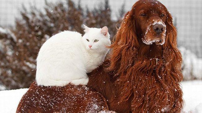собака і кішка