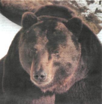 Полювання на ведмедя в уральських горах