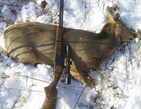 Полювання на сибірську косулю