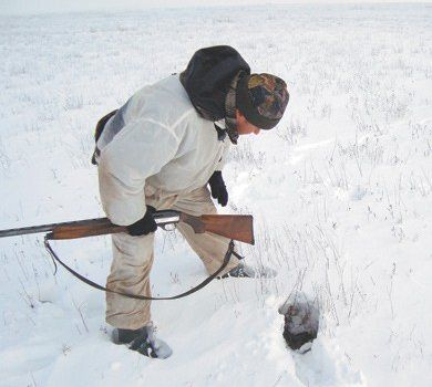 Полювання на зайця русака взимку