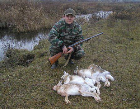 Полювання на зайця в засідці