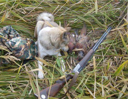 Полювання з собакою на фазана на Україні
