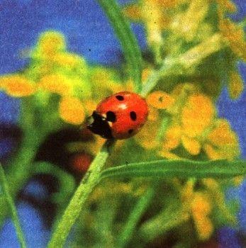 Фото 4 Забарвлення і наслідування у тварин