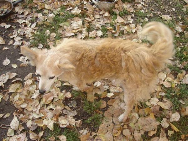 Онкологічні захворювання у собак