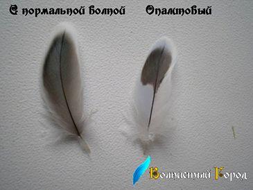 Опаліновим