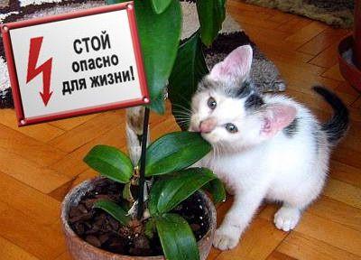 небезпечно для кішок