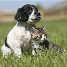Небезпека від домашніх тварин