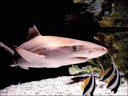 Небезпечні риби