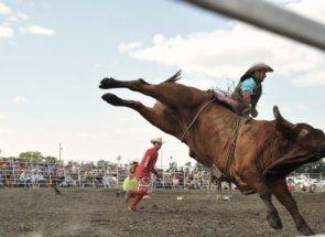 Небезпечний спорт для справжніх чоловіків - родео на биках