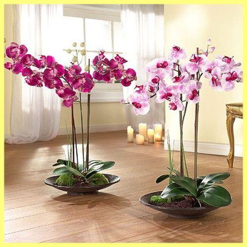Орхідея догляд і вирощування в домашніх умовах