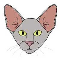 Ориентальная порода кішок. морда