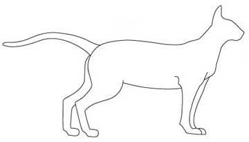Ориентальная порода кішок. тіло