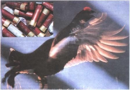 Зброя і патрони на борову дичину