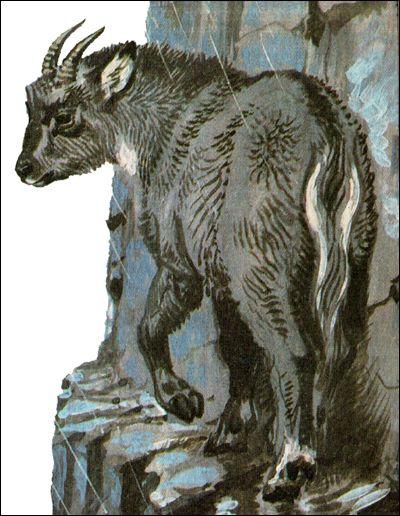 Горал (nemorhaedus caudatus)