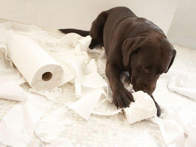 Щеня гризе туалетний папір