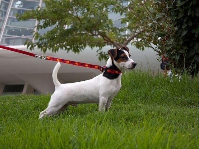 Собака на повідку поруч з деревом