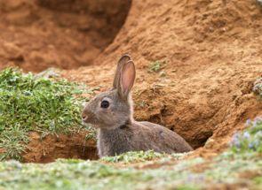 Приклад кролячій ями